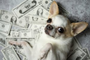 vad kostar en hund